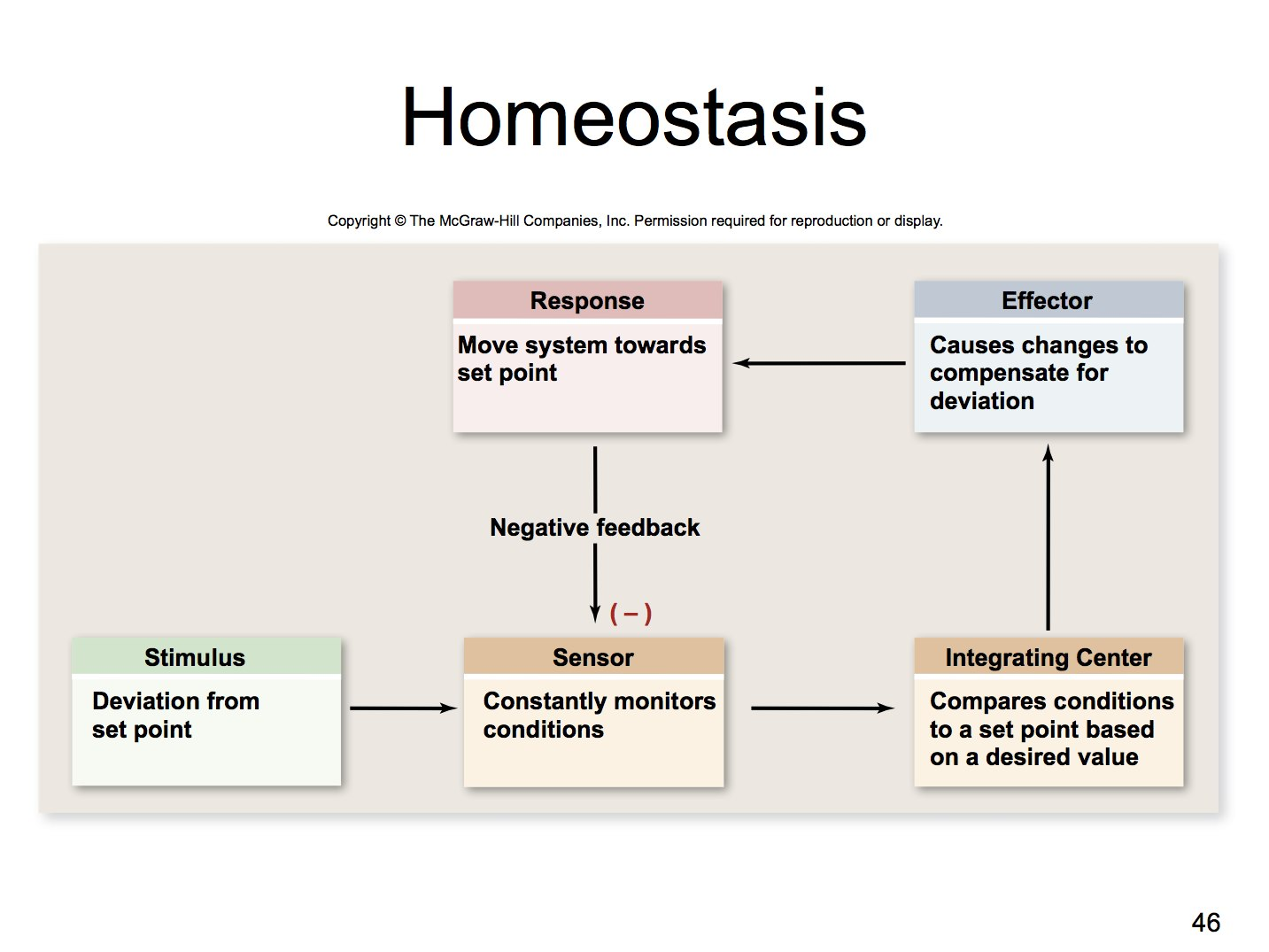 homeostasis and how the body responds The body has mechanisms to alter or maintain  how does the body maintain normal  the body quickly responds to the low blood volume and pressure by the following.