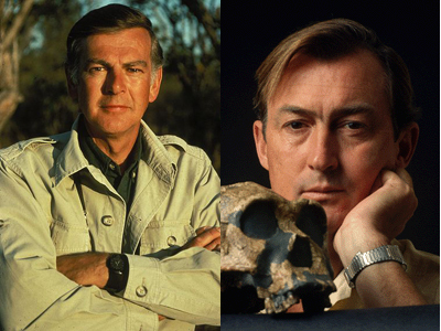 the discoveries of hominid fossils by louis leakey and donald johanson Louis leakey measures an ancient skull found in tanzania 6 7 the find made the leakeys famous in 1960, louis found the hand and foot bones of a 12-year-old donald johanson, an archaeologist, found parts of a 32-million-year.